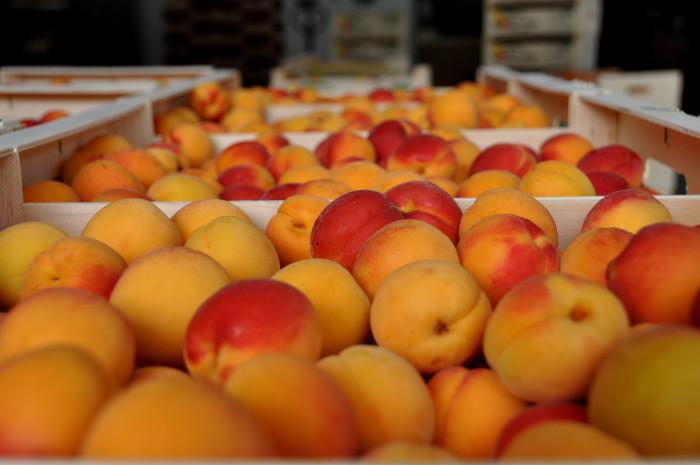 mas de l'arbre - Abricots