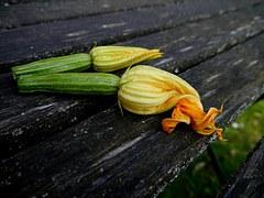 Fleurs de Courgettes - MDA